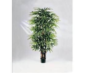 Комнатное растение рапис
