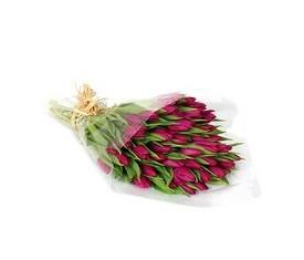 49 бордовых тюльпанов заказать с доставкой