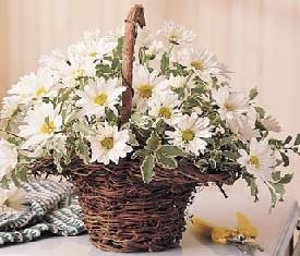 корзина цветов 25 ромашек и зелень