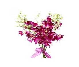 9 розовых орхидей дендробиум
