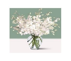19 белых орхидей дендробиум
