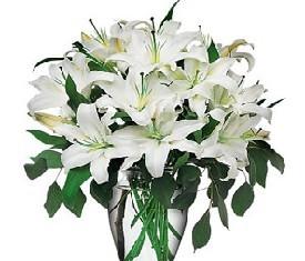 Букет из 9 восточных белых лилий