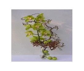 Композиция из зеленой орхидеи и корилуса