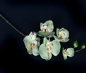 Фаленопсис зеленый искусственный