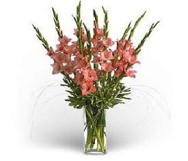 Букет из 9 розовых гладиолусов
