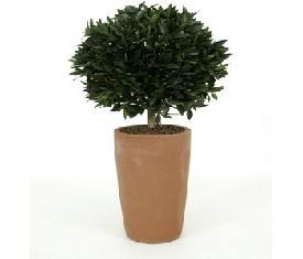 Искусственное растение Лаурус Нобелис