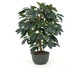 Искусственное растение Кофе Арабика