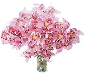 ПОЗДРАВЛЯЕМ!  Пышного цветения Вашим орхидеям!