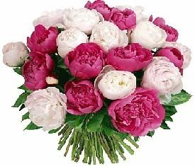 19 белых и розовых Пионов купить в Москве