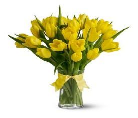 Оленька.  Желтые тюльпаны-вестники разлуки с твоим лишним весом.  Ура.  Пусть уходит эта цифра в небытие.