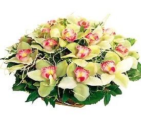 корзина из 25 зеленых орхидей и зелени