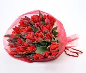 49 красных попугайных тюльпанов