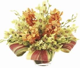 19 Орхидей и аспидистра