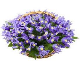 Корзина из 101 цветка ирисов