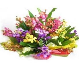 Корзина из 35 цветов орхидеи
