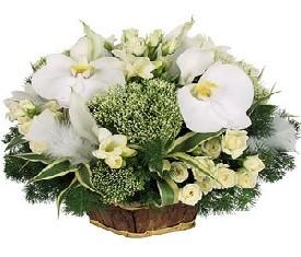 корзина из орхидей, роз, трахелиума