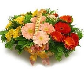 корзина из 19 цветов герберы