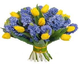 20 желтых тюльпанов и 25 синих цветов гиацинтов заказать с доставкой