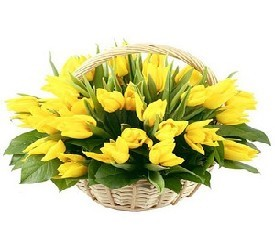 Корзина из 49 желтых цветов тюльпанов