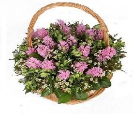 корзина из 25 цветов гиацинтов и альстромерии