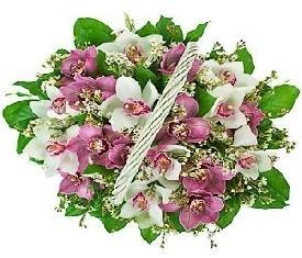 корзина из орхидей заказать цветы с доставкой