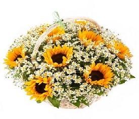корзина из цветов ромашек и подсолнухов