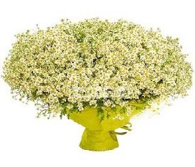 Полевые цветы - заказать цветы купить Полевые цветы доставка ...