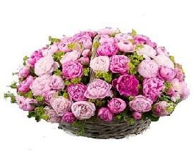 корзина из 55 цветов розовых пионов