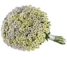 Букет из 55 ромашек цветов сантини