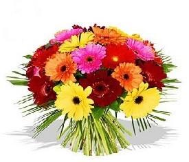 букет из 31 цветка герберы