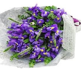 букет из 45 цветов ирисов