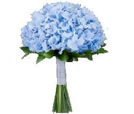 Букет для невесты из синей гидрангии