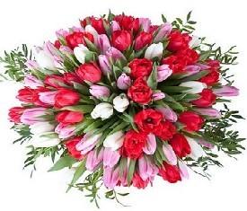 букет из 151 разноцветных тюльпанов микс