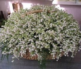корзина из 501 ландыша купить цветы ландыши в Москве