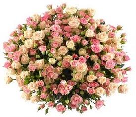 букет из 49 белых и розовых кустовых роз