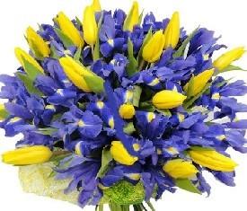 букет из 45 цветов синих ирисов и 20 желтых тюльпанов