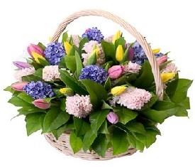 корзина из 25 цветов гиацинтов и 20 тюльпанов