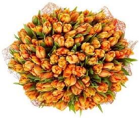 151 оранжевый тюльпан