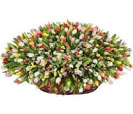 Корзина из 501 разноцветного тюльпана микс с доставкой