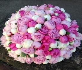 101 белый, розовый и малиновый пион
