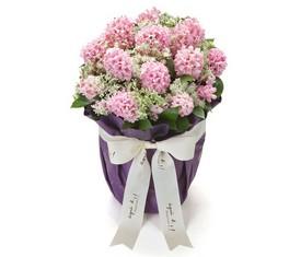 25 розовых гиацинтов в коробке купить в Москве