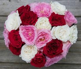 19 былых, розовых и красных пионовидных роз