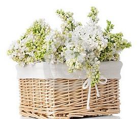 корзина из 9 веток цветов белой сирени и зелени