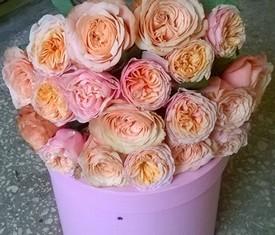 19 пионовидных роз