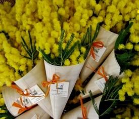 цветы и букеты из мимозы в подарок