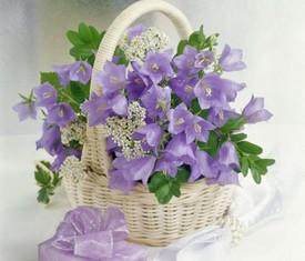 полевые цветы колокольчики в корзине