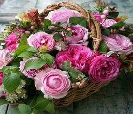 цветы пионовидной розы в корзине