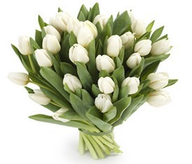 Букет из 21 цветка белого тюльпана