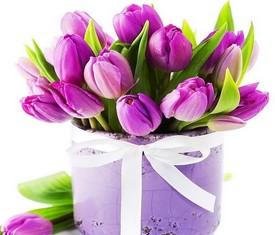 Розовые тюльпаны в коробке на 8 марта