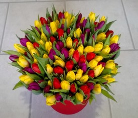 коробка из 99 тюльпанов микс